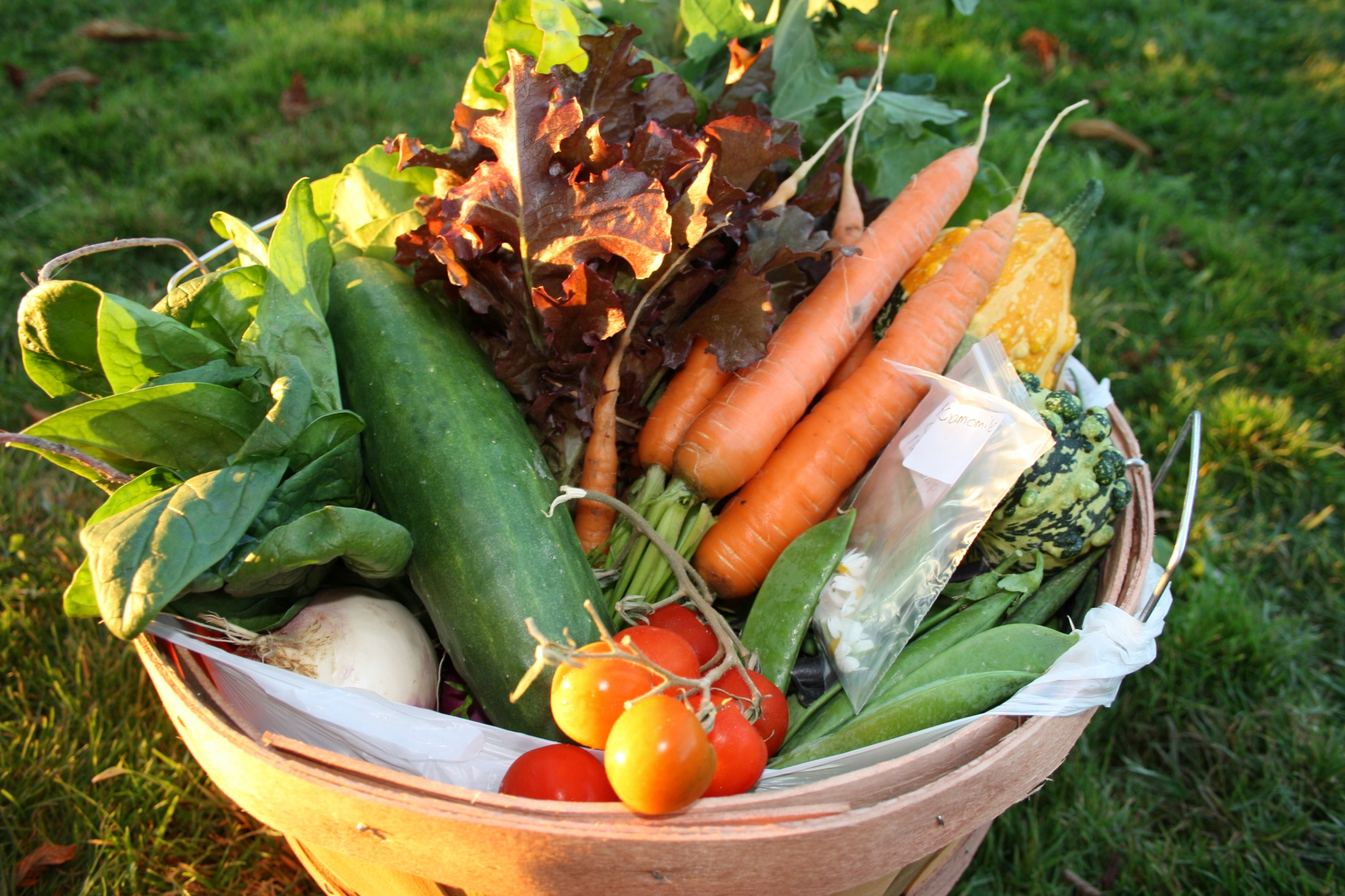 weekly vegetable baskets at On the Farm vegetables