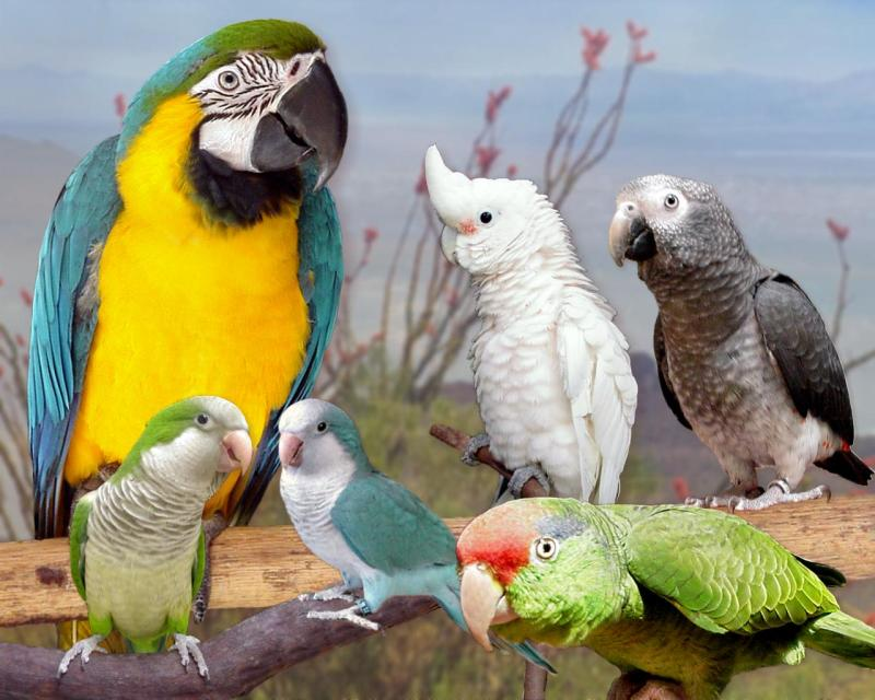 Exotic Birds For Sale >> Exoticbirds Com Exotic Birds