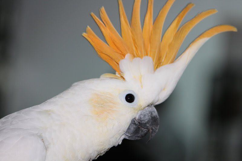 links exotic birds campaign arizona exotic bird rescue exotic bird ...