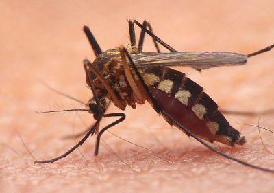 Mosquito Control , Greenville, SC