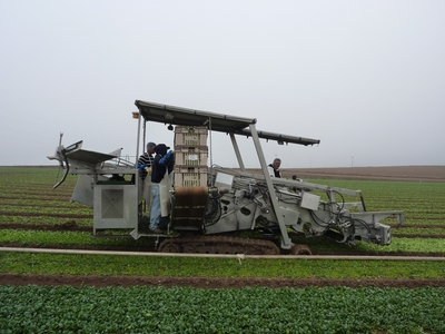 Attention to food safety was important in the design of this spinach harvester.