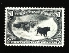 United States Cattle in the Storm