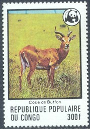 Congo #458