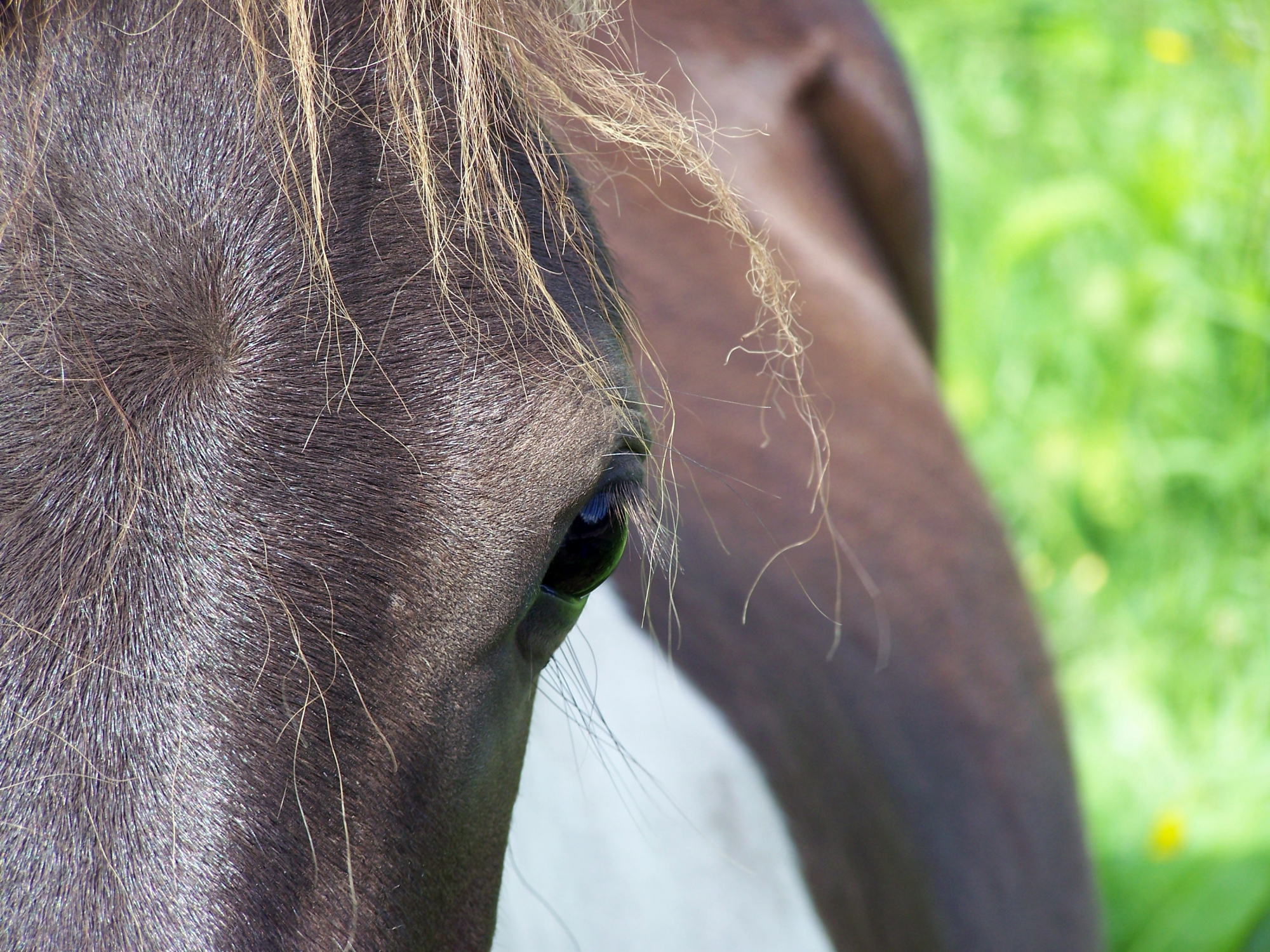 Understanding Laminitis in ponies and horses