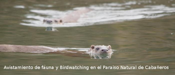 Avistamiento de fauna