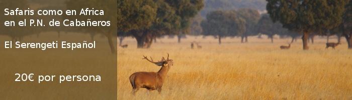 Safaris como en Africa en Cabañeros