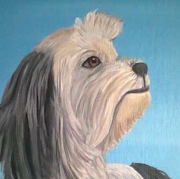 Llasa Apso Portrait