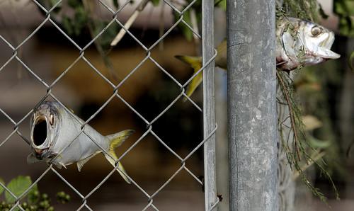 Orlando Fence Repair