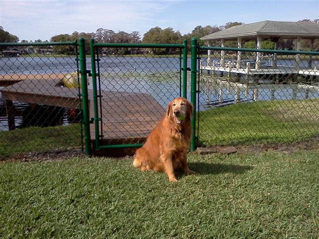 Fence Orlando Dog