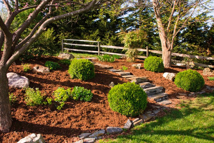 Landscape installation of hill with boxwoods, small retaining wall, and stone steps